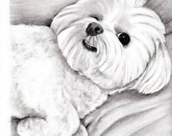 Custom Dog Pet Portrait Graphite Pencil 8x10