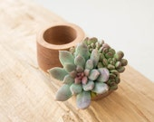 Green Blue Succulent Ring Box Bearer Case Wooden Round Decorated Engagement Ring Holder Proposal Ring Case Gift Home Decor Wedding