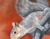 Squirrel print of watercolour and gouache painting. ST115, 5 by 7 print, squirrel painting, squirrel wall art, woodland animal print