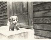 "Vintage Snapshot ""Scout"" Adorable Puppy Dog Spaniel Cavalier King Charles Cocker Spaniel Dog Springer Spaniel Found Photo"
