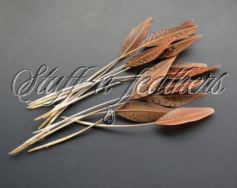 Golden pheasant feathers stripped, natural brown real feathers brown tips for millinery, crafts, weddings / 4-8 in (10-20cm) long / F179-4st