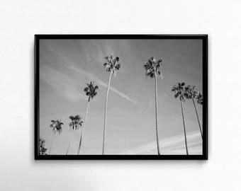 Digital Download, Palm Tree Photography, Printable, Nature Photography, Downloads, Palm Trees, Minimalist, Minimalist Wall Decor, Wall Art