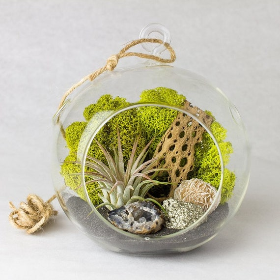 Terrarium Kit with Geode, Gypsum Rose, Pyrite and Air Plant  || Medium Round Hanging