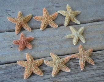 "Tiny Sugar Starfish (Less than 1"") | 5 Pieces"