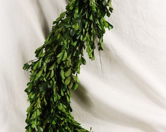 Preserved Boxwood Garland Natural 45 Inches Long Very Full Also Available with Statice
