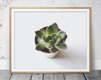 Succulent Print, Home Decor, Succulent Wall Print, Succulent Art Print, Succulent Art, Succulent Picture, Cactus Print, Cactus Art, 126