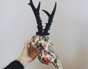 Preorder // Being and Becoming // European Roe Deer Skull