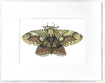 Matted illustration, 1 of 10 drawing series, Moth collection, Entomology art