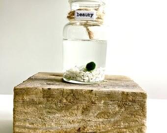 Terrarium- marimo Ball , Japanese Moss Ball -  Inspirationnal/ motivationnal word tile glass vase marimo terraium