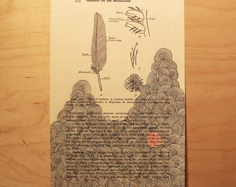 Endgrain Ink Drawing | Antique General Zoology Textbook Page