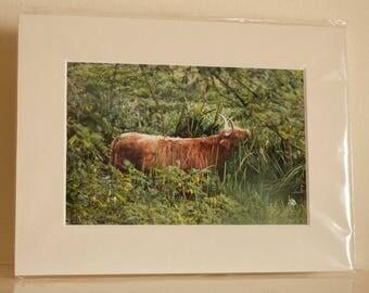 Mounted print: Laud a bull.