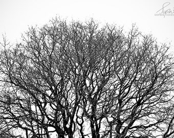 Tree photography, black and white, nature photography, tree print, minimalist, fine art photography, framed print, 5x7, 8x12, 12x18, 16x24