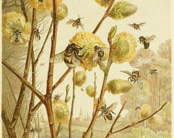 Honey Bee, Bee Honey, Bee Art, Honey Bee Art, Honey Art, Art Prints, Pussy Willow, Willow Pussy, Honeybees Art, Spring Scenery, Spring Art