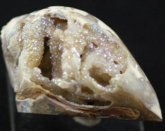 Iridescent Drusy Quartz-lined Fossil Gastropod shell, India.  Mineral Specimen for Sale