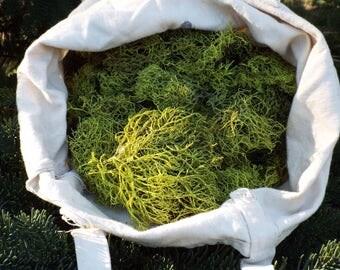 moss,green moss,wreaths,terrariums,bonsai,floral arrangements