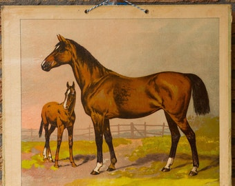 Vintage  Old Print on cardboard  Horses School Chart Lithograph  FREE SHIPPING