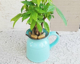 Rustic torquoise pitcher with lucky money tree