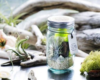 DIY Vintage Glass Jar Air Plant Terrarium Kit - Free Shipping