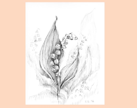 Lily Of The Valley Art Original Artwork Botanical Sketches