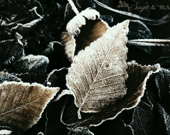 Sepia frozen leaves, sepia leaf print, frost, nature photography, macro, abstract, dark photography, minimalist, woodland print, romantic