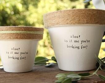 "6"" Lionel Richie Aloe! » Aloe Indoor and Outdoor Pot or Planter"
