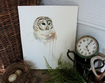 Barred Owl Watercolor PRINT -SALE-buy 2 get 1