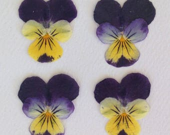 24 Perfect Pressed Real Pansy Flowers - Small Pansies - Violas - Johnny Jump Ups