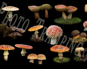 Mushroom Overlays