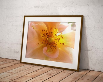 Flower photography Digital instant download / digital download - Macro flower photography