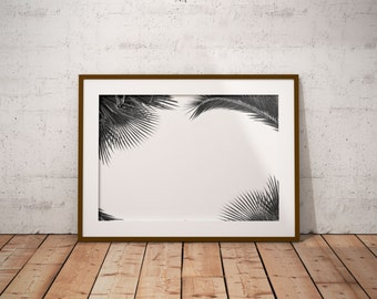 2 black and white palm leaf and color photographs