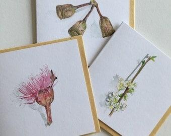 Gumnut- botanical greeting card