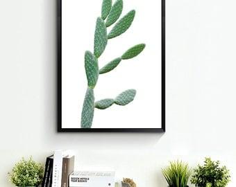 Cactus Print, Cactus Art, Cactus Photo, Cactus Decor, Cacti Photography, Cactus Poster, Cactus Print *16*