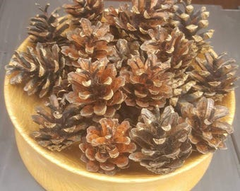 Pine cones. 20 in a bundle