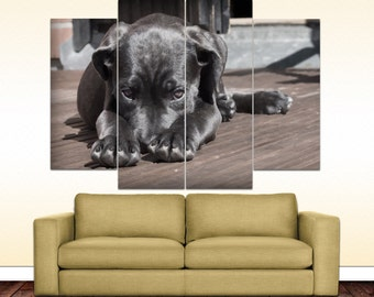 Bashful dog canvas picture
