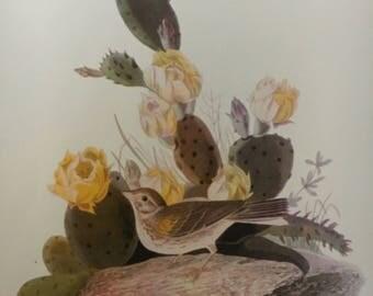 """Vintage Audubon Print, """"Vesper Sparrow"""""""
