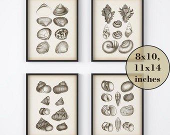 Set of 4 prints, Nautical print set, Vintage shell print, Printable set, Instant download prints, Antique nautical illustrations, Art prints