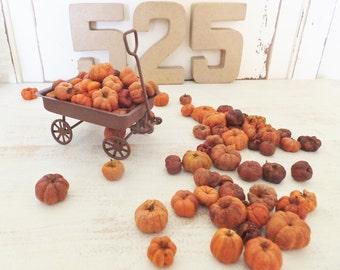 AUTUMN PUTKA PODS ~ Craft Supply ~ Potpourri ~ Holiday Decor ~ Halloween Minature ~ Fairy Garden ~ Orange ~ Bowl Fillers
