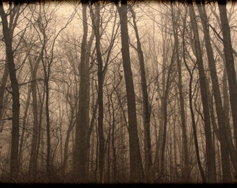 Nature Photography, Woods, Mysterious, Wall Decor, Fine Art Prints, Wall Decoration, Office Decoration