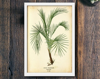 Palm Tree Tropical Wall Art Print, Green Leaves Plant Photo, Printable Large Poster, Digital Download, Photography, Modern Decor (#4134b)