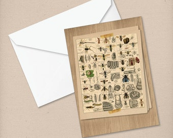 Cabinet of Curiosity Collection - Insects Print - Greeting Card