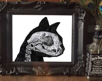PRINT AND FRAME Domestic cat skull illustration silhouette gothic oddity anatomy taxidermy drawing