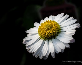 Nature Photography, Wall Art, Fine Art Photography, Home Decor