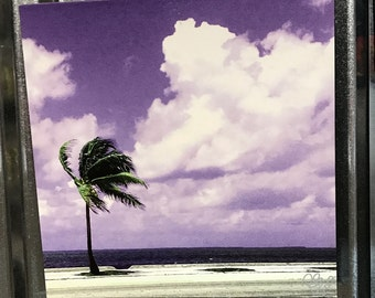 Pop Art Photography - Key West Palm Tree