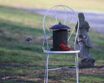 Birds in the Garden Bird Photography