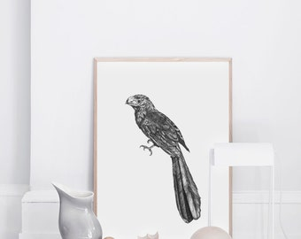 Feathers - Ink Illustration Art Print