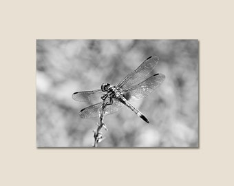 Large Black and White Nature Photography Canvas Gallery Wrap - Dragonfly