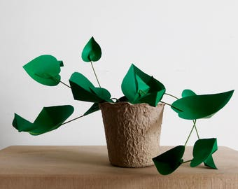 Felipe climbing Philodendron - Heart leaf Philodendron - vegetable Collection - paper Jungle - urban botanical