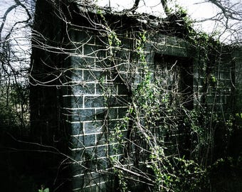 """House Nature Art Print entitled """"The Abandoned"""". Wall Decor, Photography, 1 of 3"""