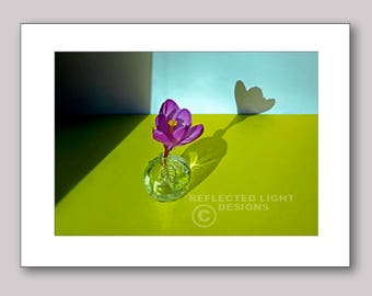 Photo Note Card, Crocus and Shadow