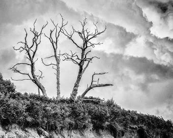 Cliff top trees - a black and white photographic print , Monochrome tree photograph, Silhouetted trees, Black and white photographic print